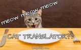 cat translator truly silly